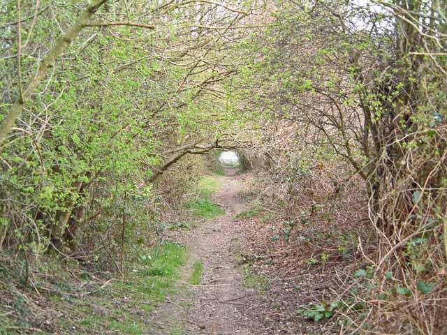Below Little Butts Farm, Cousley Wood