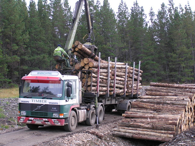 Loading timber in the Naver Forest