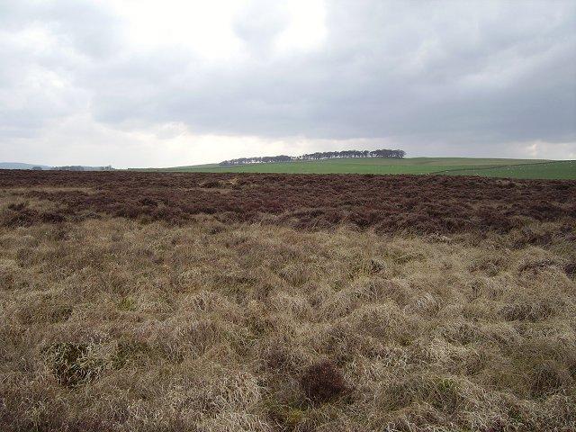 Moss, Herbertshaw