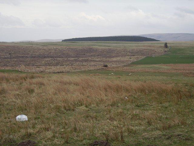 Craigburn Plantation