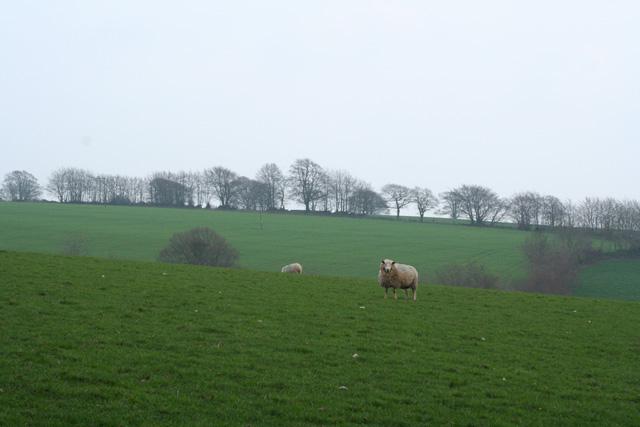 Upton: by Lotley Farm