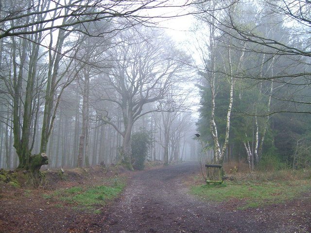 Bridleway on Ideford Common