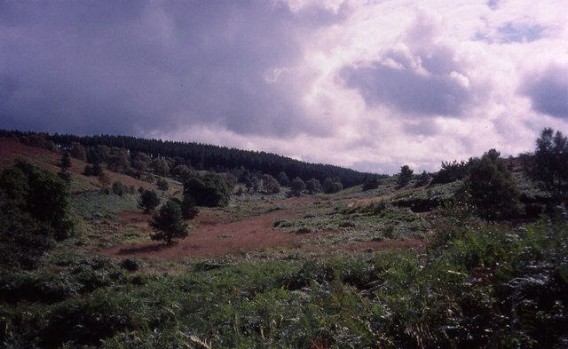 Sherbrook Valley on Cannock Chase