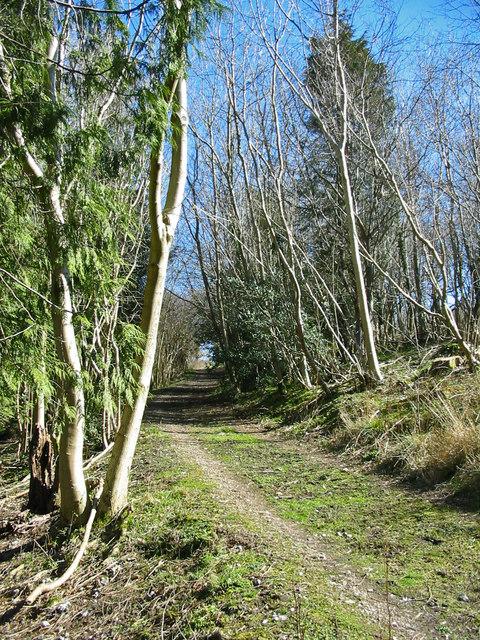 Woodland track Highfield Hill Batcombe Dorset