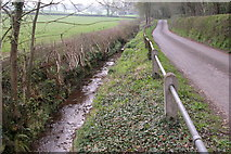 SO5432 : Ditch near Catson by Philip Halling