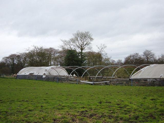 Near Fittontown Farm, Macclesfield