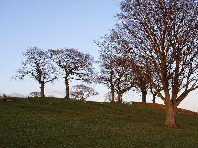 Pasture near Blencarn