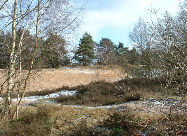 Ling Common, North Wootton, Norfolk.