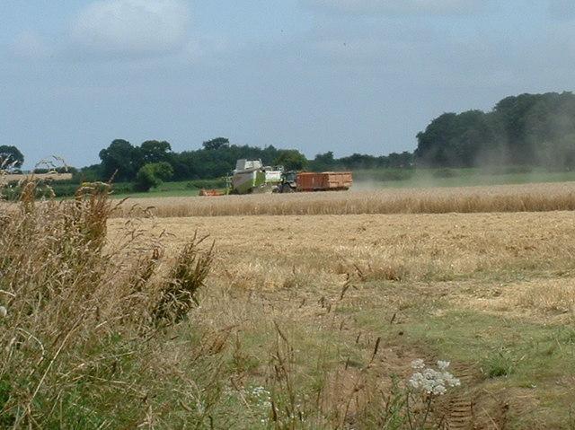 Harvest time.
