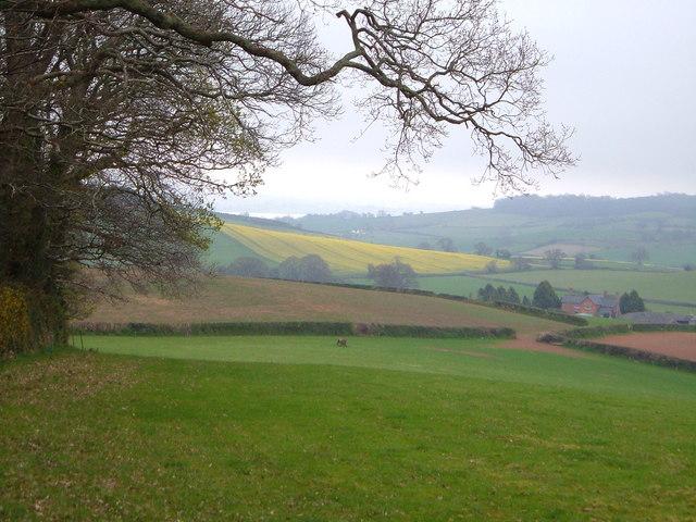 Ash Farm from Haydon Common