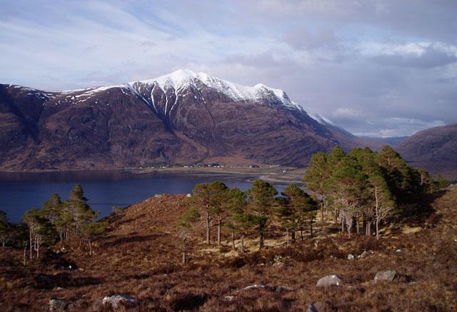 Scots pines above Loch Torridon