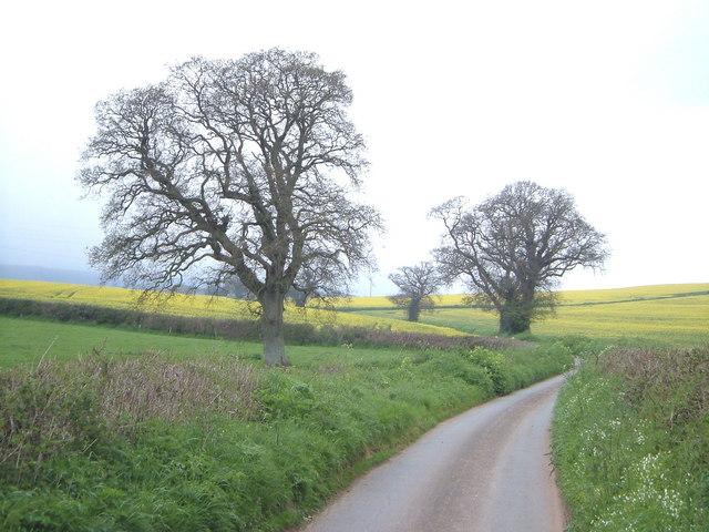 Lane near Kenton