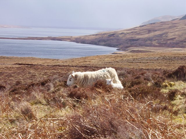 Ewe and Lamb by Loch Craggie