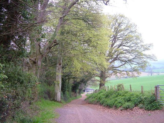 Lane to Home Farm, Oxton