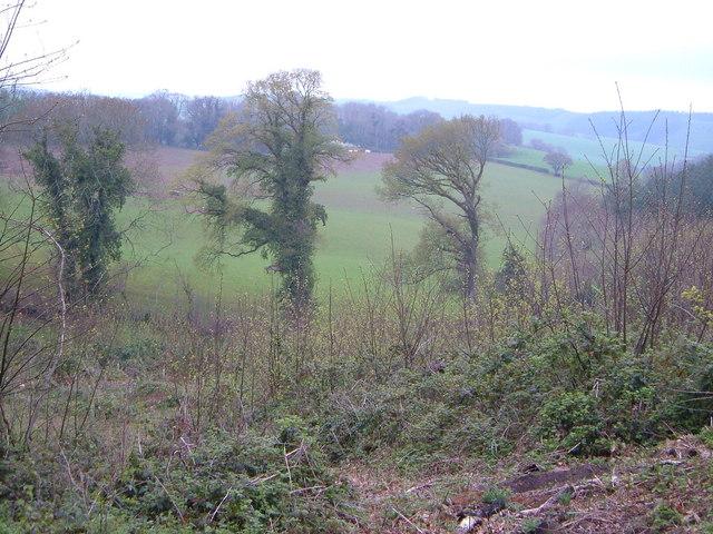 Haydon Wood