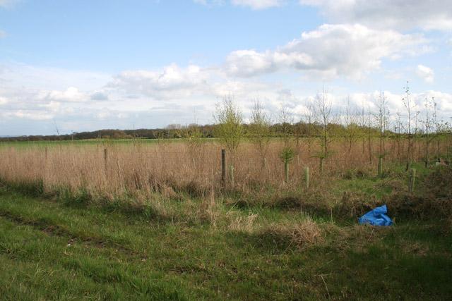 Farmland and New Trees near Markfield