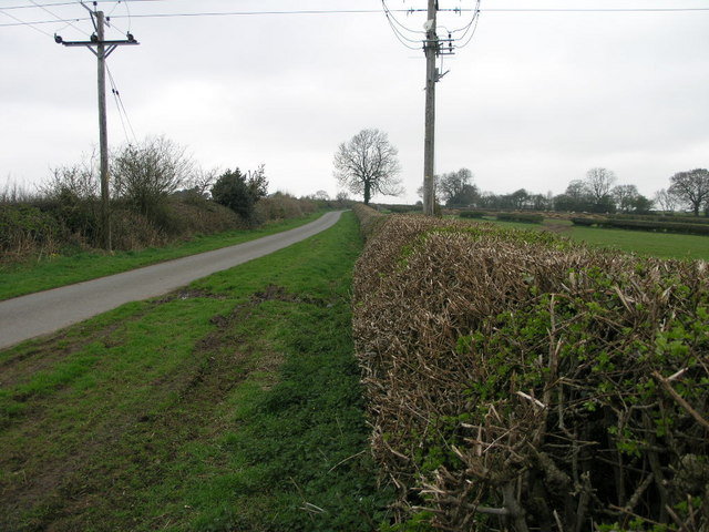 Flat Top Hedge