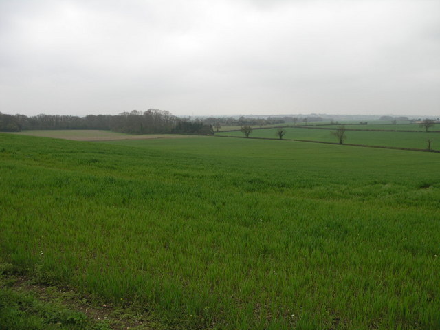 Fields and Spinney