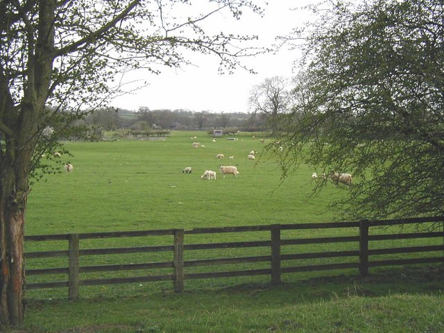 Pastoral view in spring