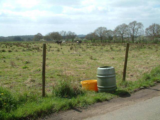 Grazing, Woodlands, Dorset
