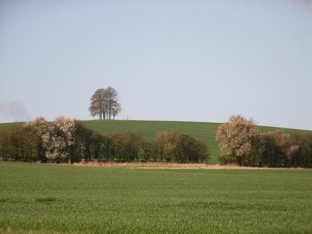 Farmland below Brightwell Barrow