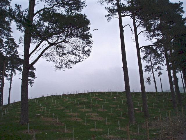 New trees at Cwm Is y Rhiw