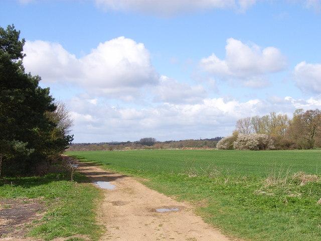 Farmland between copses near Berinsfield