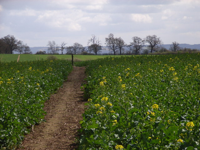 Public footpath between Marsh Baldon and Chiselhampton