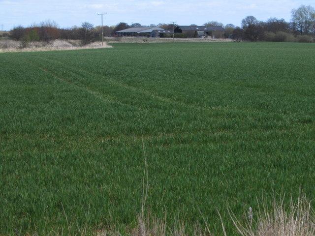 Gowlie Farm