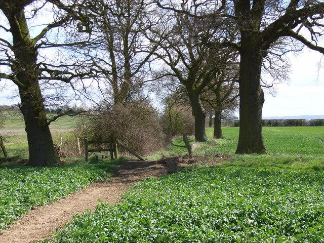Footpath between Chiselhampton and Marsh Baldon