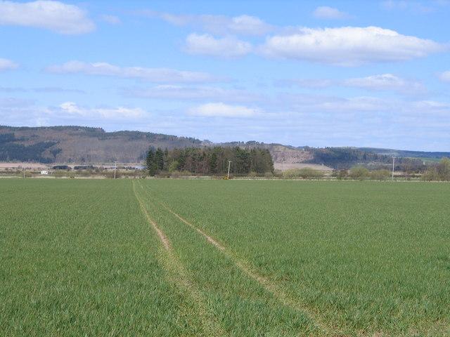 Looking Across Baiglie Farm