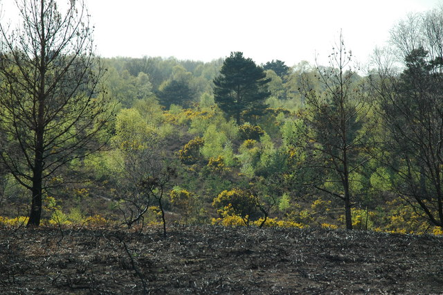 Yateley Common - Fire damage and spring colours