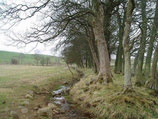 Field near Yorkston