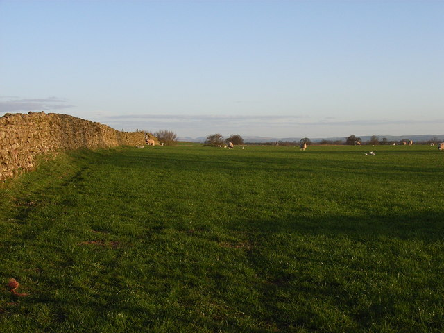 Pasture near Skirwith