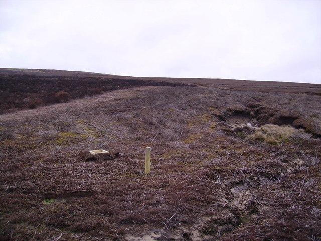 Grouse Feeder Burn Moor Fell