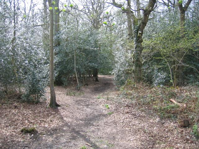 Lion Wood Nature Reserve