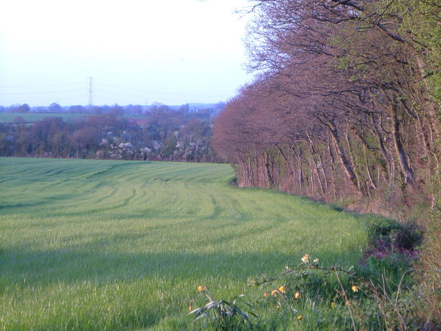 Field edge near Hitt's Barton