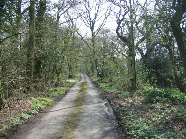 Cherry Pit Lane