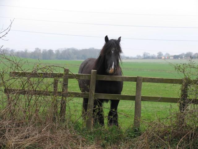 Horse watcher