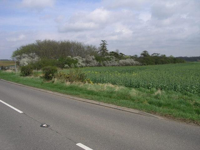 Footpath to Bloxholm