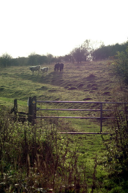 Yew Hill Butterfly Reserve