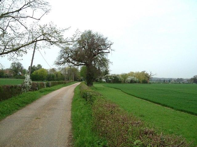 Lane to Salisbury Hall