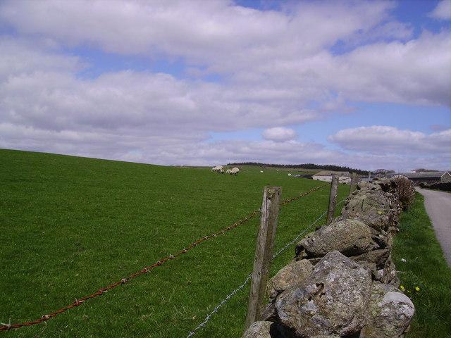 Hill Park Farm