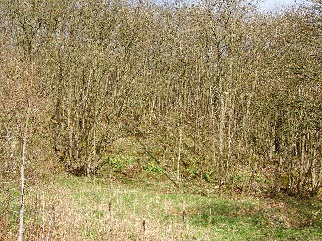 Queenscairn Wood.