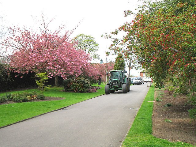 Tractor and Cherry Blossom