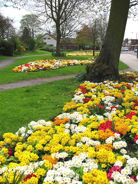 Primula's outside the park