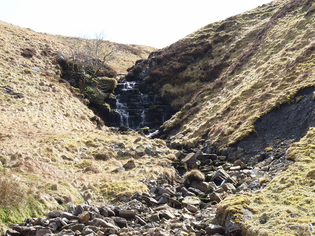 Brown Gill