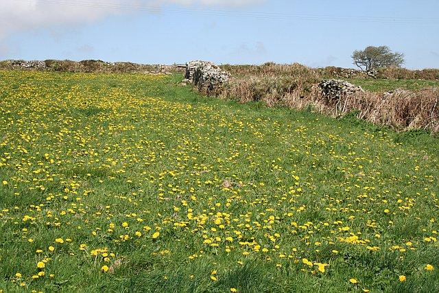 Fields near Carnmenellis