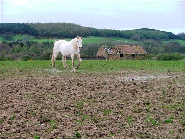 Barn and Paddock, Poplar Farm