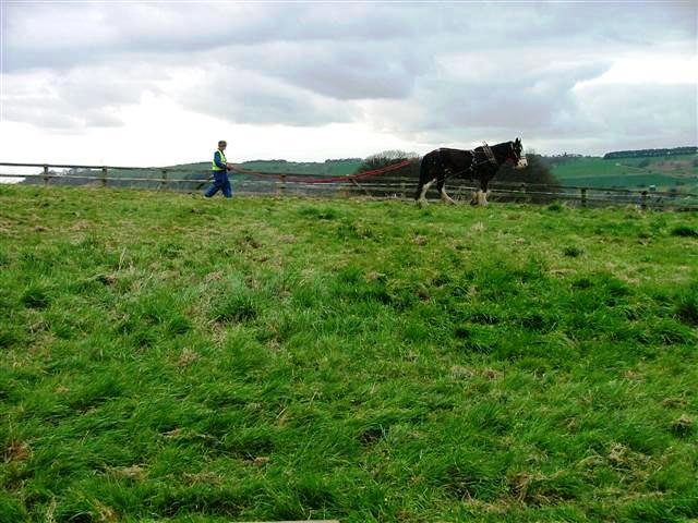 Horse Training, High Farm